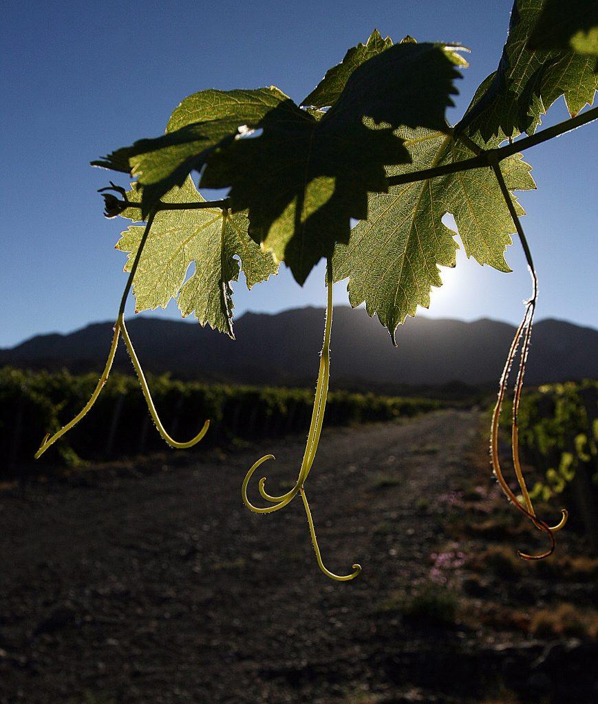 Sulphite free wines in Argentina