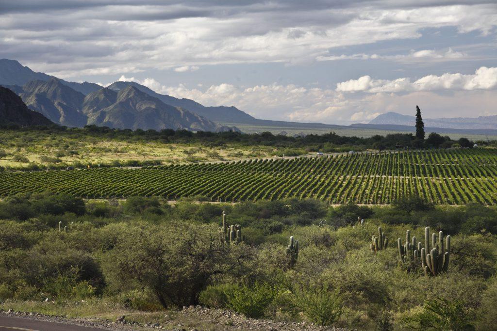 Argentina, contrasting terroirs: Northwest vs. Patagonia