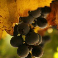 The rise of Argentine Cabernet Sauvignon