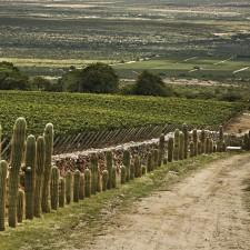 What's happening today with Argentine wines?