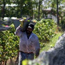 Trend: In Argentina new terroirs are emerging in unexpected areas