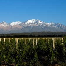 Terroir of contrasts: Uco Valley and Pedernal vs. East of Mendoza and Tulum Valley