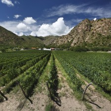 Salta: vineyards and empanadas in the shade of a cactus