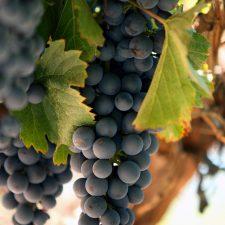 Malbec of Mendoza: diversity of flavours