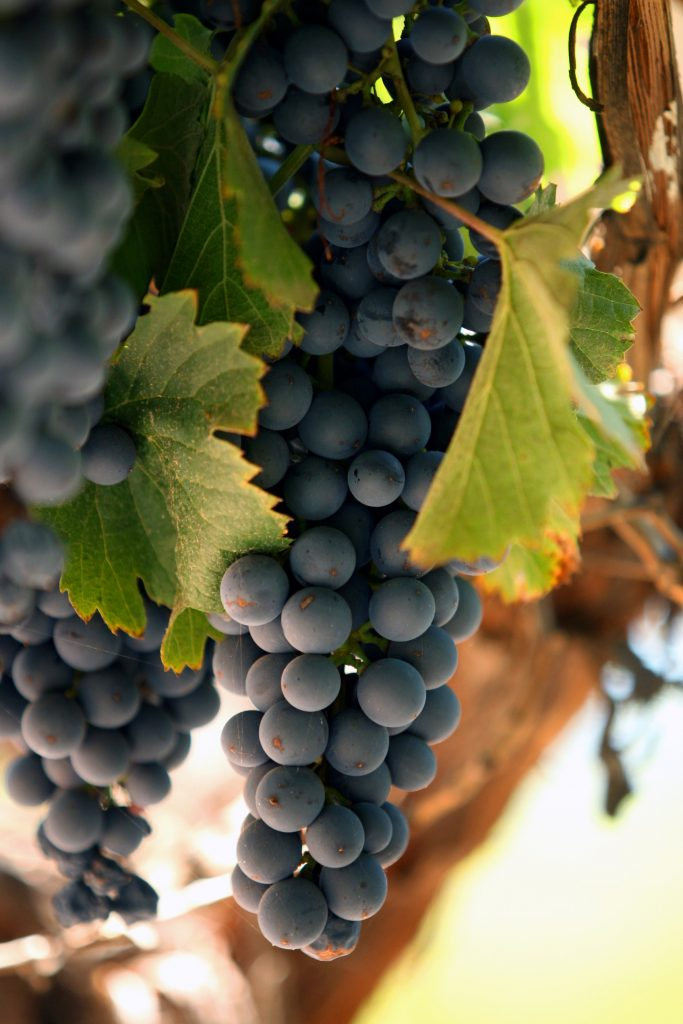 Malbec of Mendoza: diversity of flavours