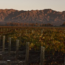 New styles of Malbec are emerging from outside Mendoza