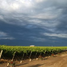 How does the denominations system work for Argentine wine?
