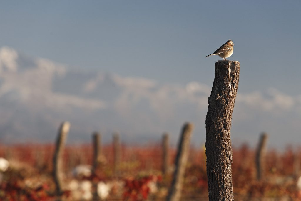 Moving towards a paradigm shift in Argentine wine