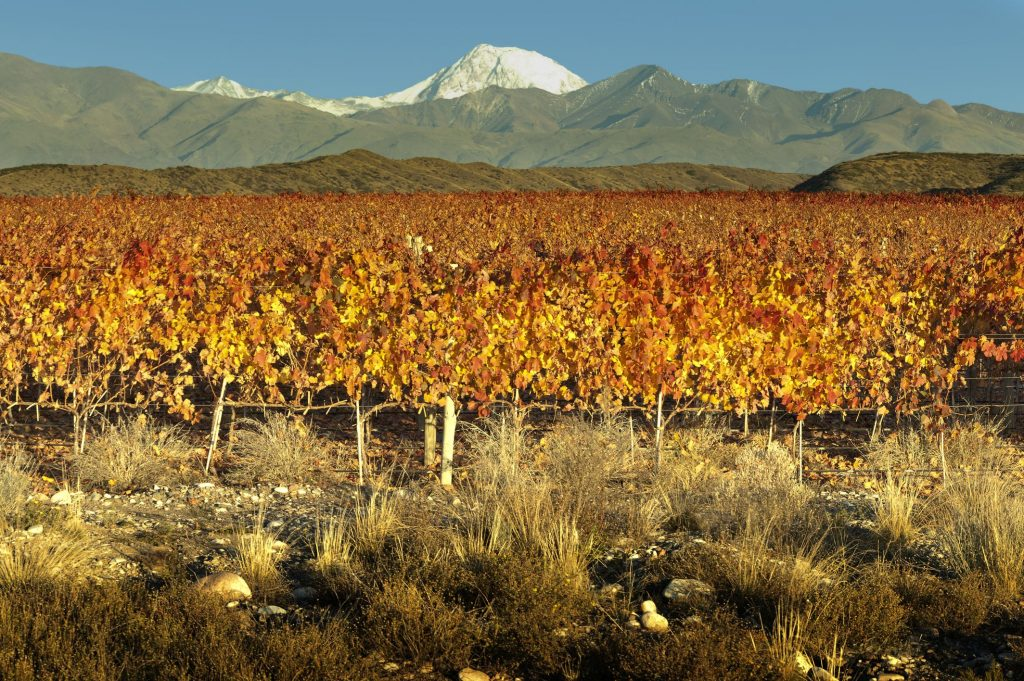 High altitude sparkling wines, the sky's the limit for freshness