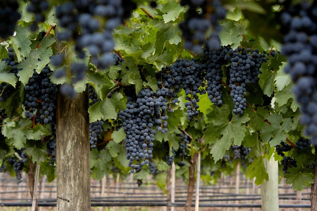 Meet the five types of tannins that can be found in Argentine wine