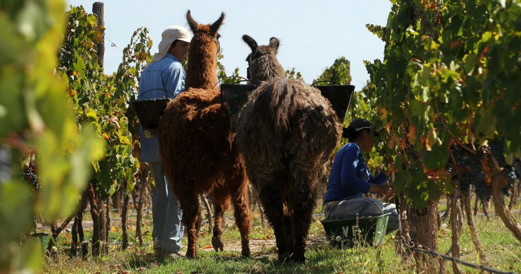 Sustainability and social responsibility; issues central to the Argentine wine industry