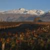 Seis terruños clásicos para redescubrir en Mendoza