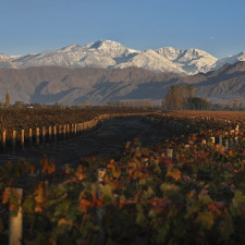 Six classic terroirs to be rediscovered in Mendoza