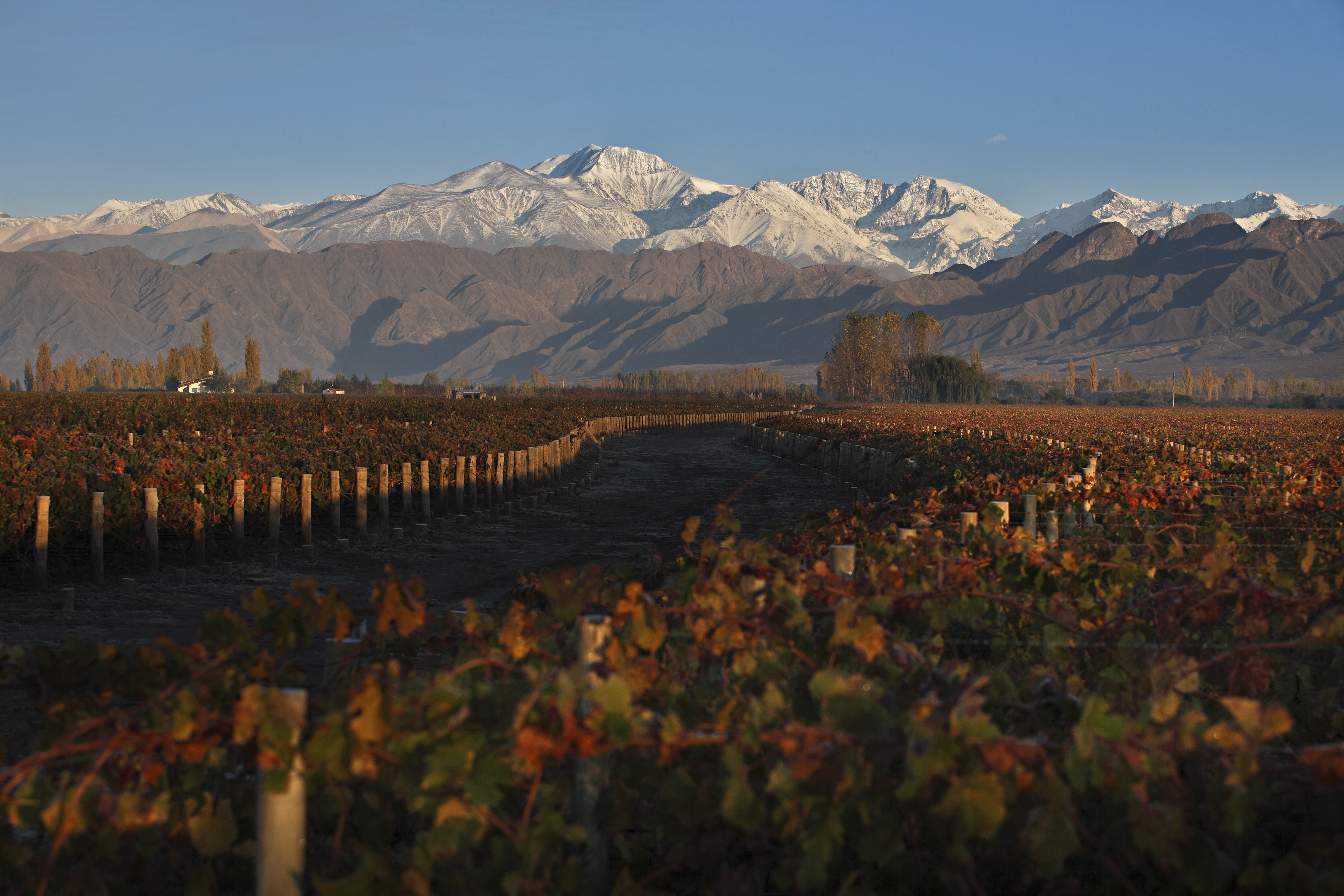 Six Classic Terroirs To Be Rediscovered In Mendoza Wines
