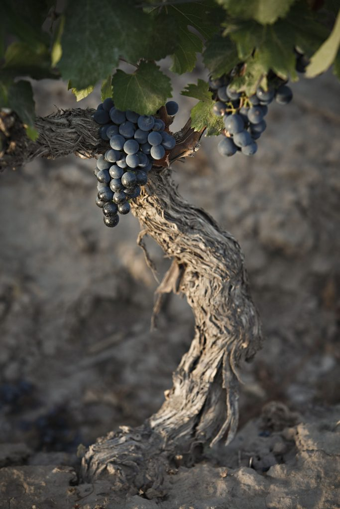 Twelve numbers that tell the phenomenon of Malbec