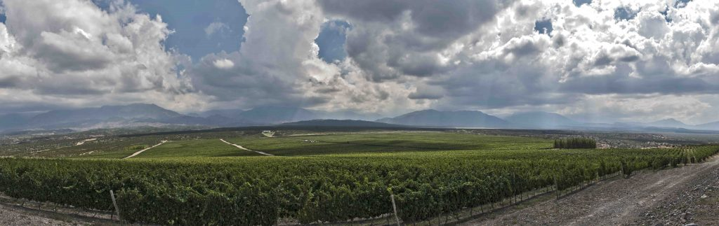 Pedernal Valley, the extreme wines of San Juan