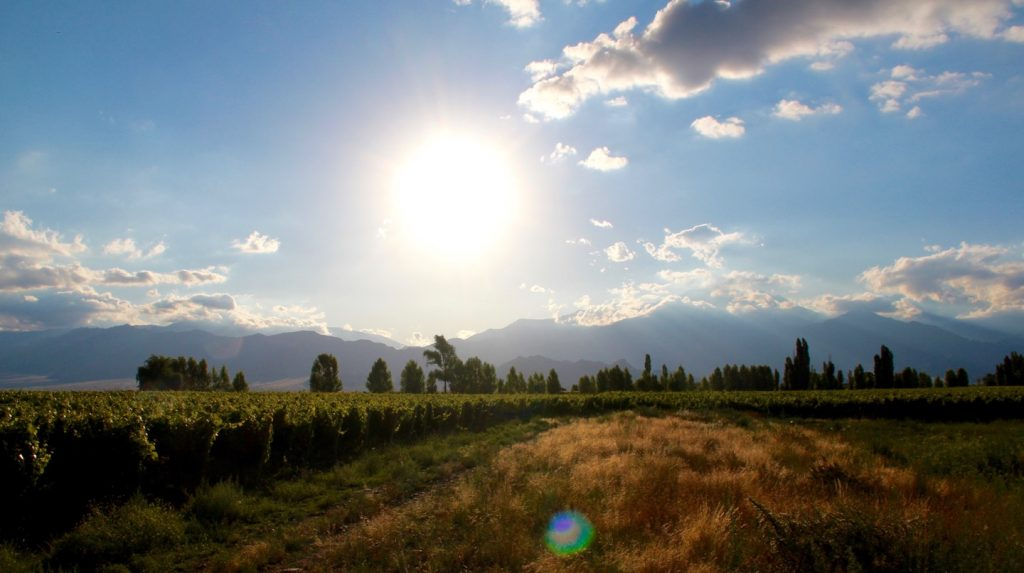 Argentine Malbec: the sky is the limit