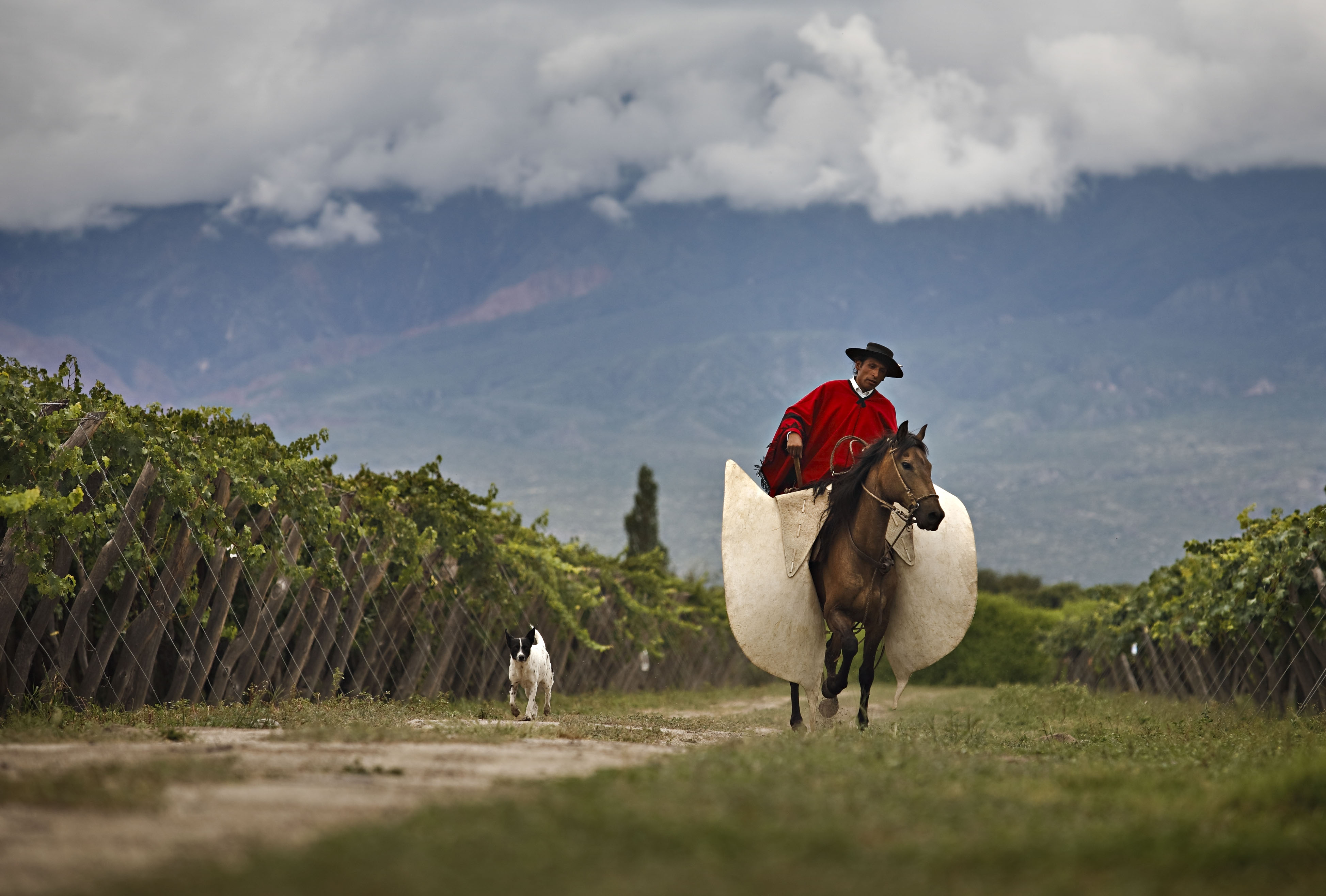 Relevamiento vitivinícola zona NorteWines of Argentina