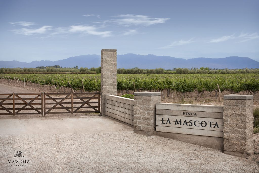 MASCOTA VINEYARDS: VINOS DE AUTOR