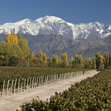 When to visit vineyards in Argentina