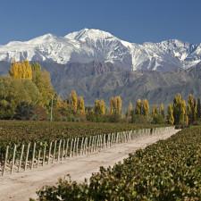 When to visit vineyards in Argentina