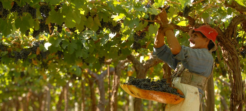 Argentine wine: 7 key points to explain its success