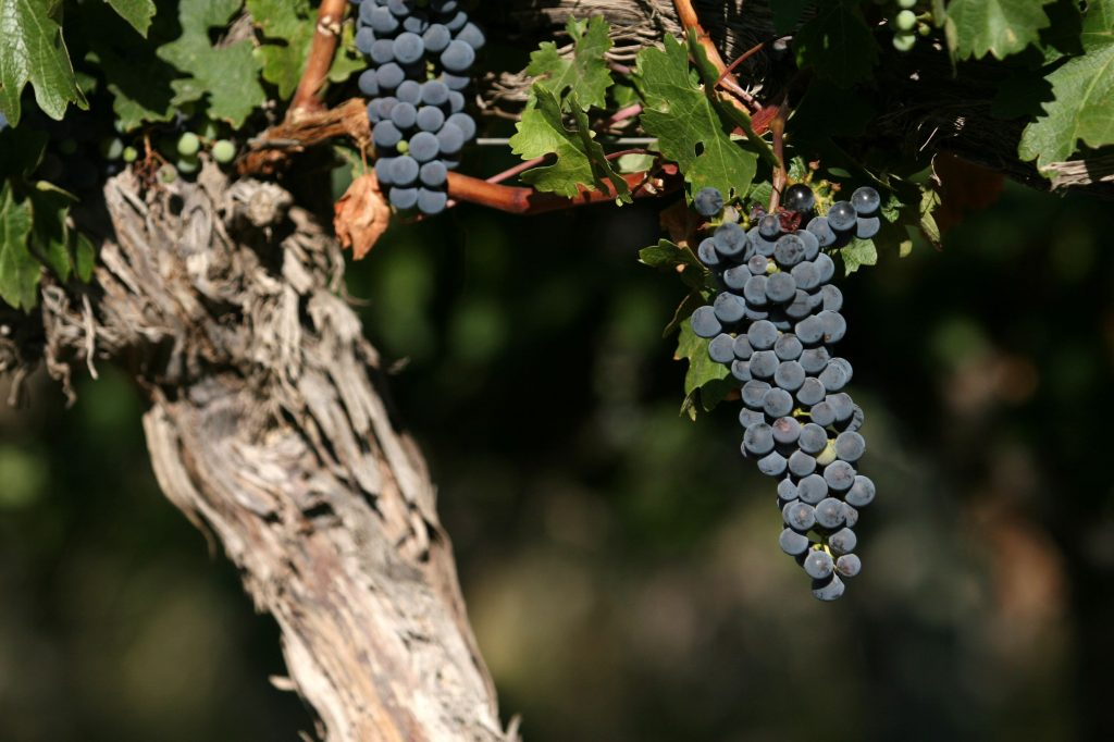 Why choose an Argentine Cabernet Sauvignon