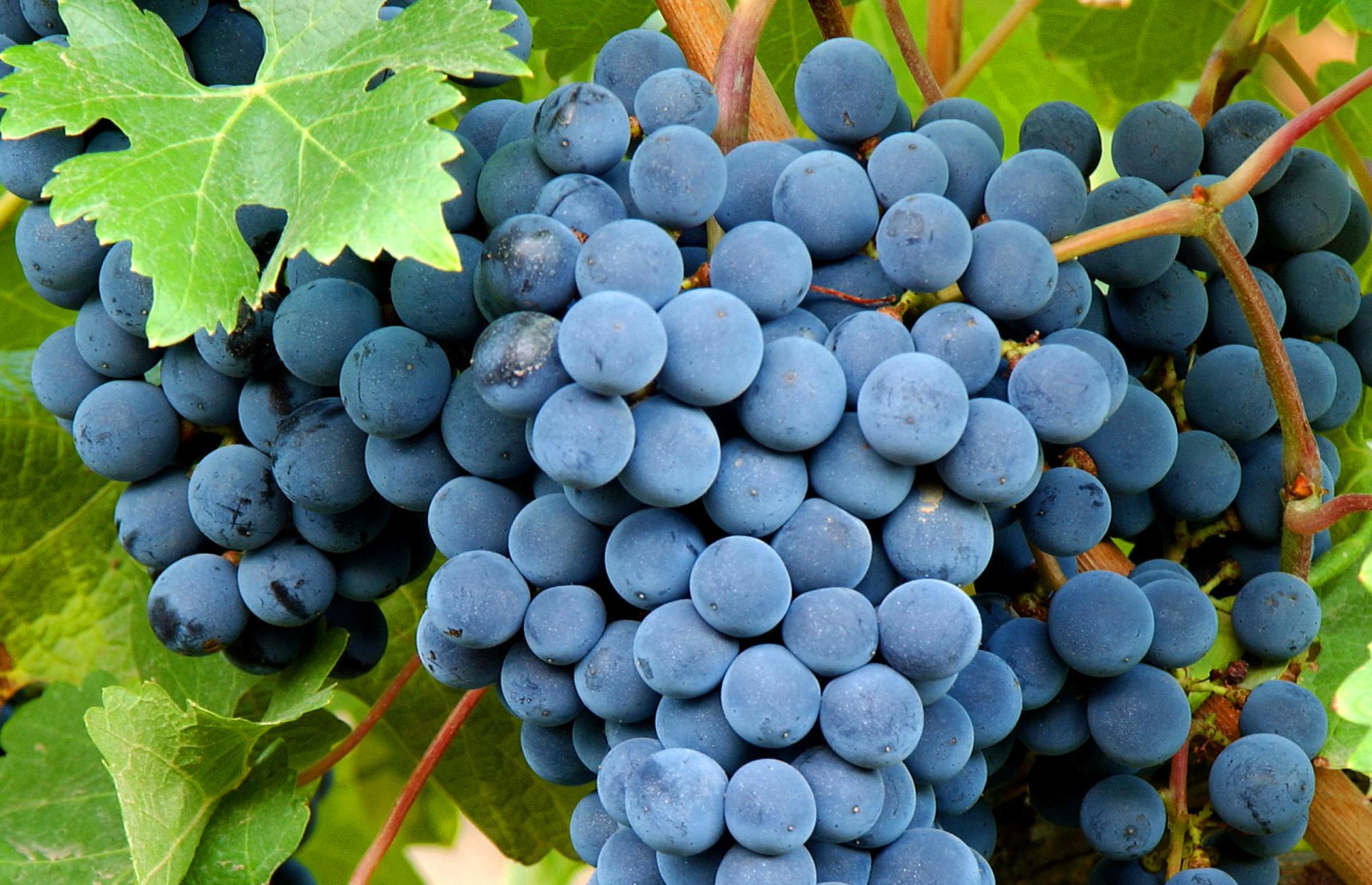Bonarda Argentina, La Reina Silenciosa - Wines Of Argentina Blog