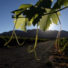 Biodynamic and natural wines in Argentina