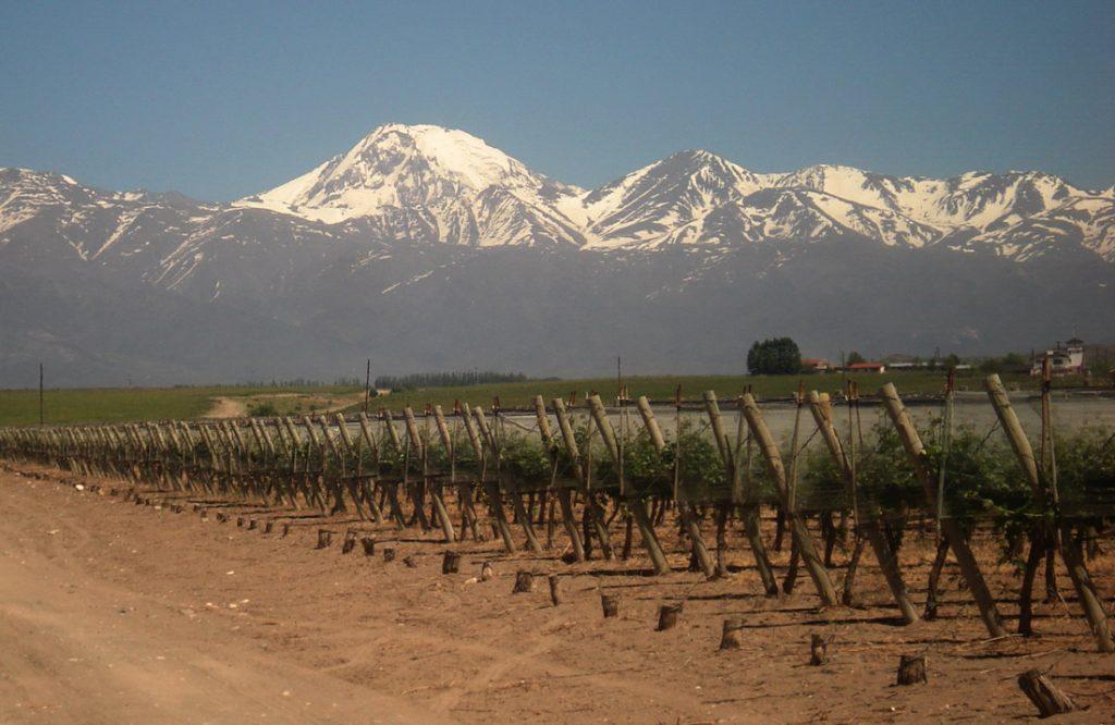 tendencias del vino argentino