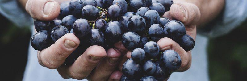 Sustainability and wine