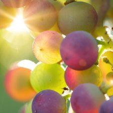 Argentine wines diversifies into Italian varieties