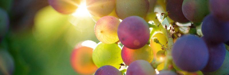 vinos argentinos de variedades italianas