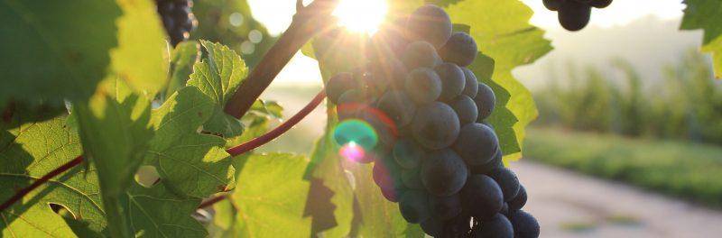 Bio Wines