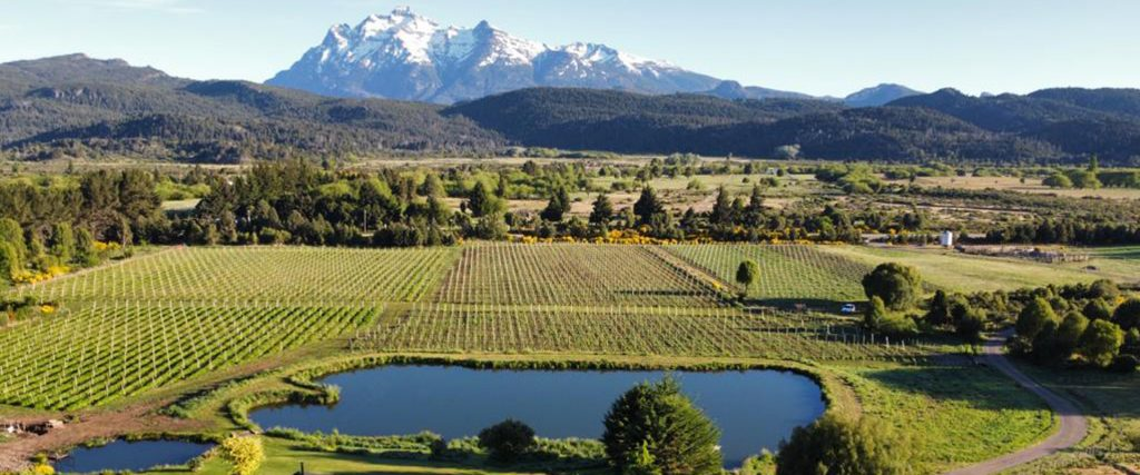 Extreme Patagonian vineyards
