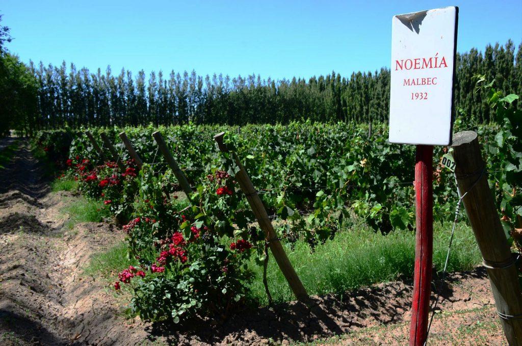 mejores viñedos para el malbec