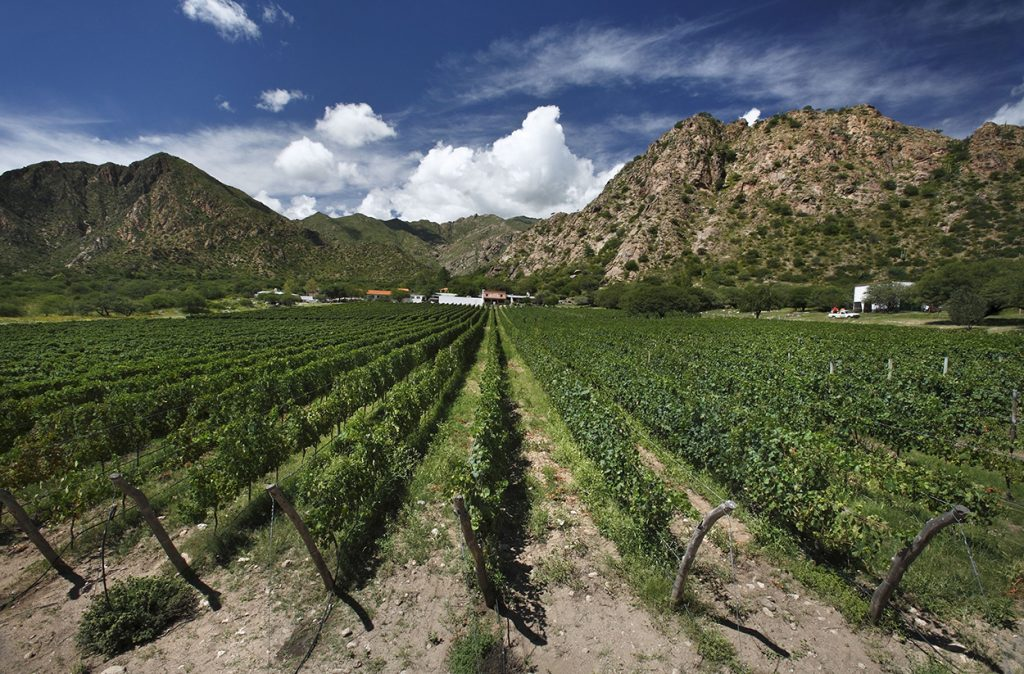 The terroirs of Argentina