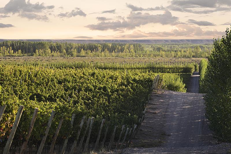 Terroirs de Argentina