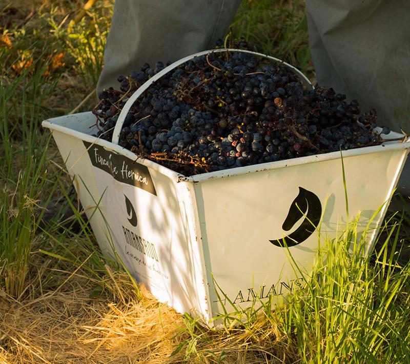 amansado wines