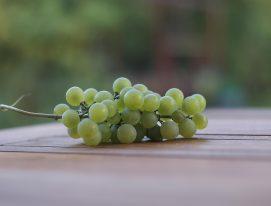 uvas-brancas mais plantadas na Argentina
