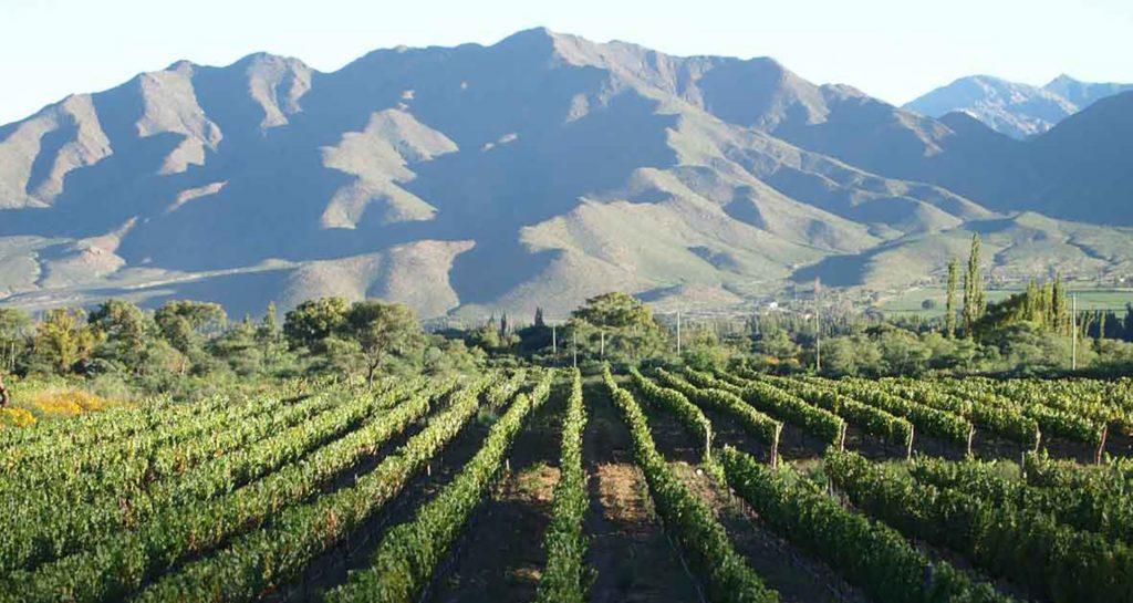 Os vinhos de Cachi