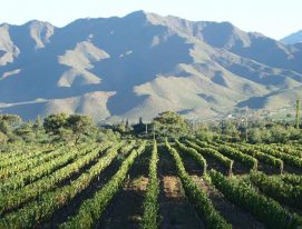 Wines from Cachi