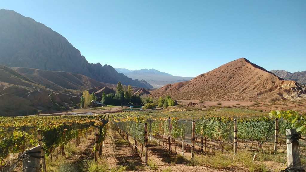 The most extreme vineyards of Argentina